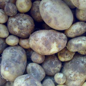 cornish_new_potatoes_0